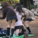 パンチラ、胸チラ見放題!一年で最も日本人女性が無防備になるお花見会場の盗撮まとめwww